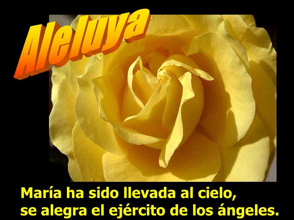 Aleluya María ha sido llevada al cielo, se alegra el ejército de los ángeles.