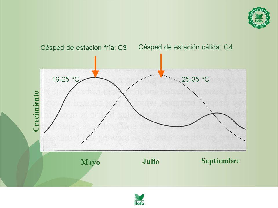 Mayo Septiembre Crecimiento Julio