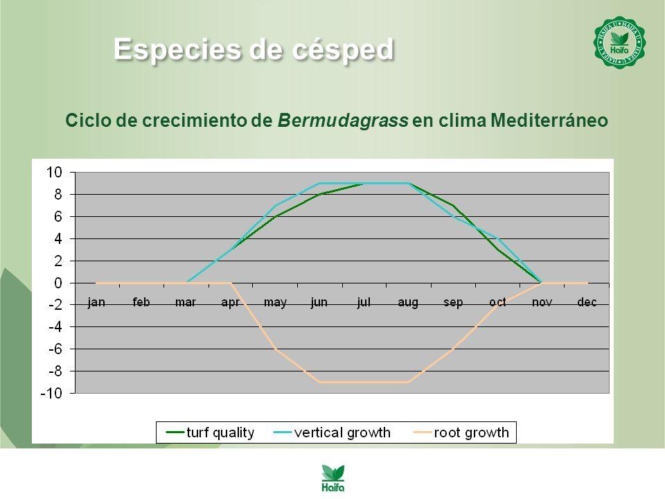 Ciclo de crecimiento de Bermudagrass en clima Mediterráneo