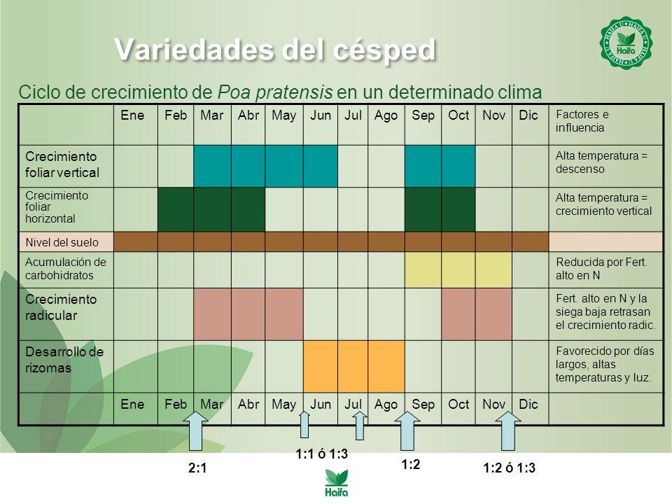 Variedades del césped Ciclo de crecimiento de Poa pratensis en un determinado clima. Ene. Feb. Mar.