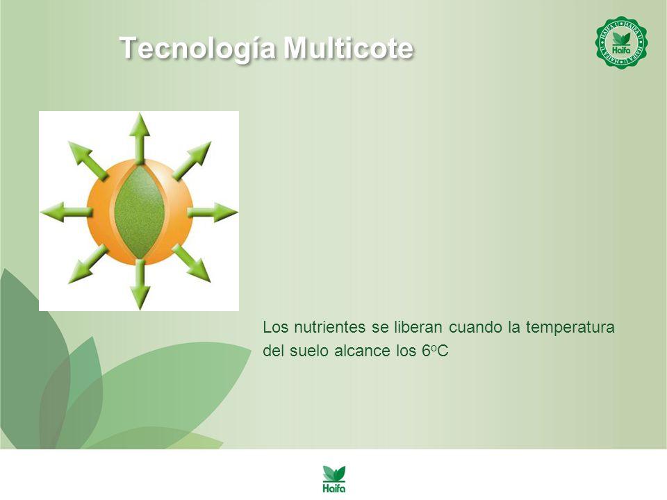 Tecnología Multicote Los nutrientes se liberan cuando la temperatura del suelo alcance los 6oC
