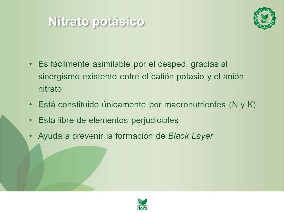 Nitrato potásico Es fácilmente asimilable por el césped, gracias al sinergismo existente entre el catión potasio y el anión nitrato.