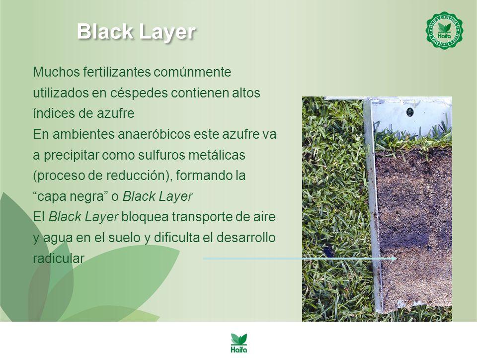 Black Layer Muchos fertilizantes comúnmente utilizados en céspedes contienen altos índices de azufre.