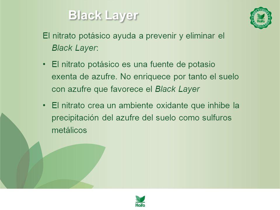 Black Layer El nitrato potásico ayuda a prevenir y eliminar el Black Layer: