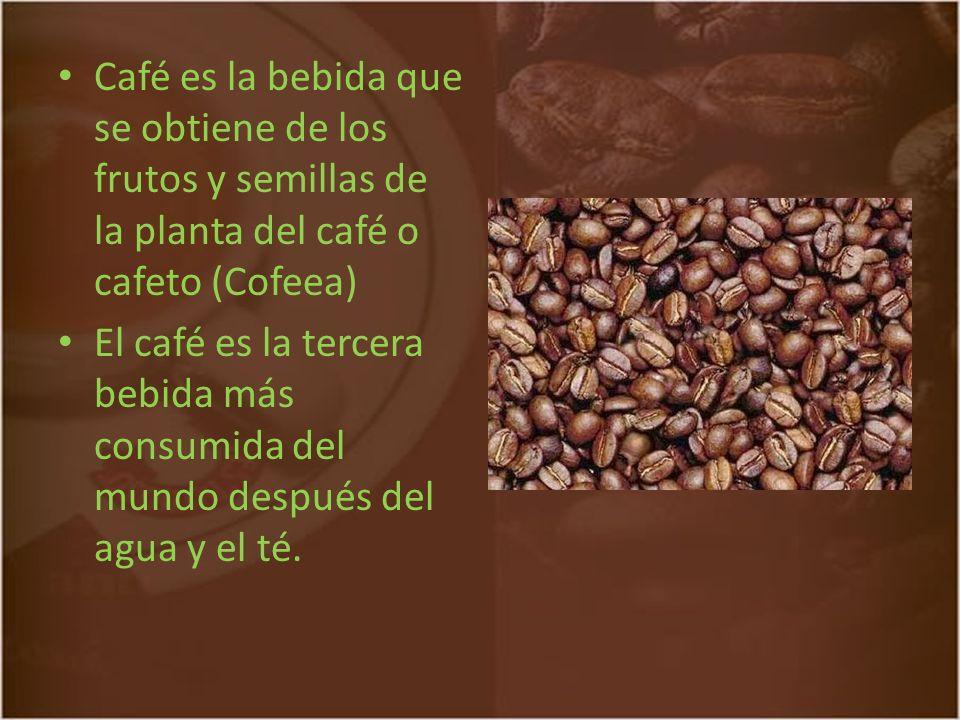 Café es la bebida que se obtiene de los frutos y semillas de la planta del café o cafeto (Cofeea)