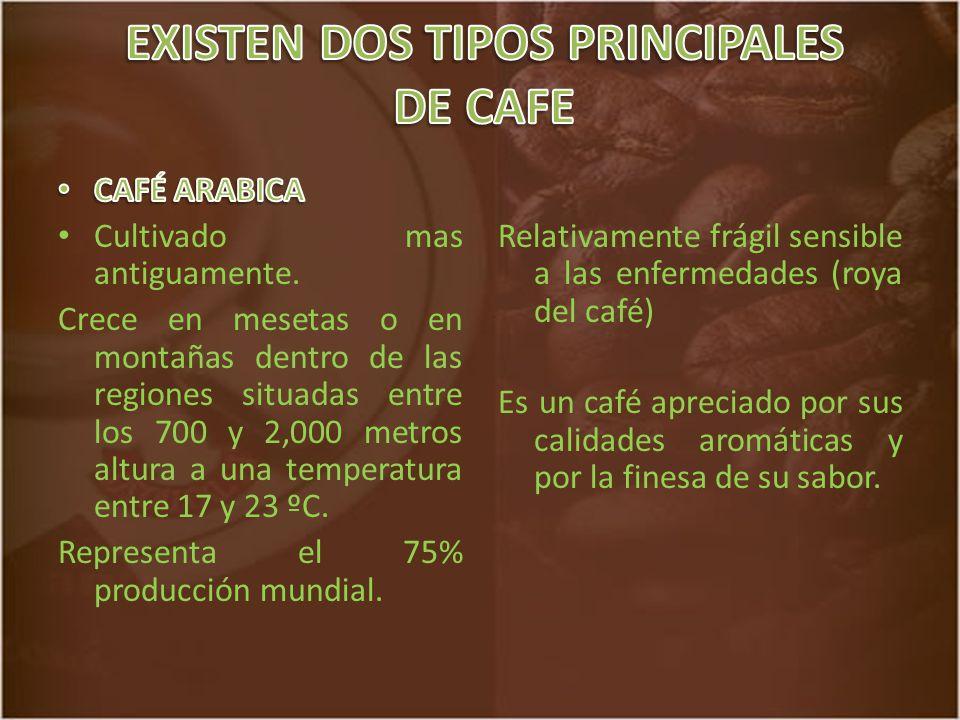 EXISTEN DOS TIPOS PRINCIPALES DE CAFE