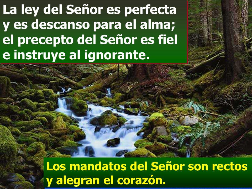 La ley del Señor es perfecta y es descanso para el alma; el precepto del Señor es fiel e instruye al ignorante.