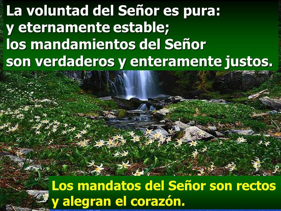 La voluntad del Señor es pura: y eternamente estable; los mandamientos del Señor son verdaderos y enteramente justos.