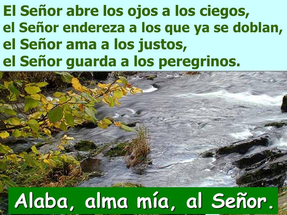 El Señor abre los ojos a los ciegos, el Señor endereza a los que ya se doblan, el Señor ama a los justos, el Señor guarda a los peregrinos.