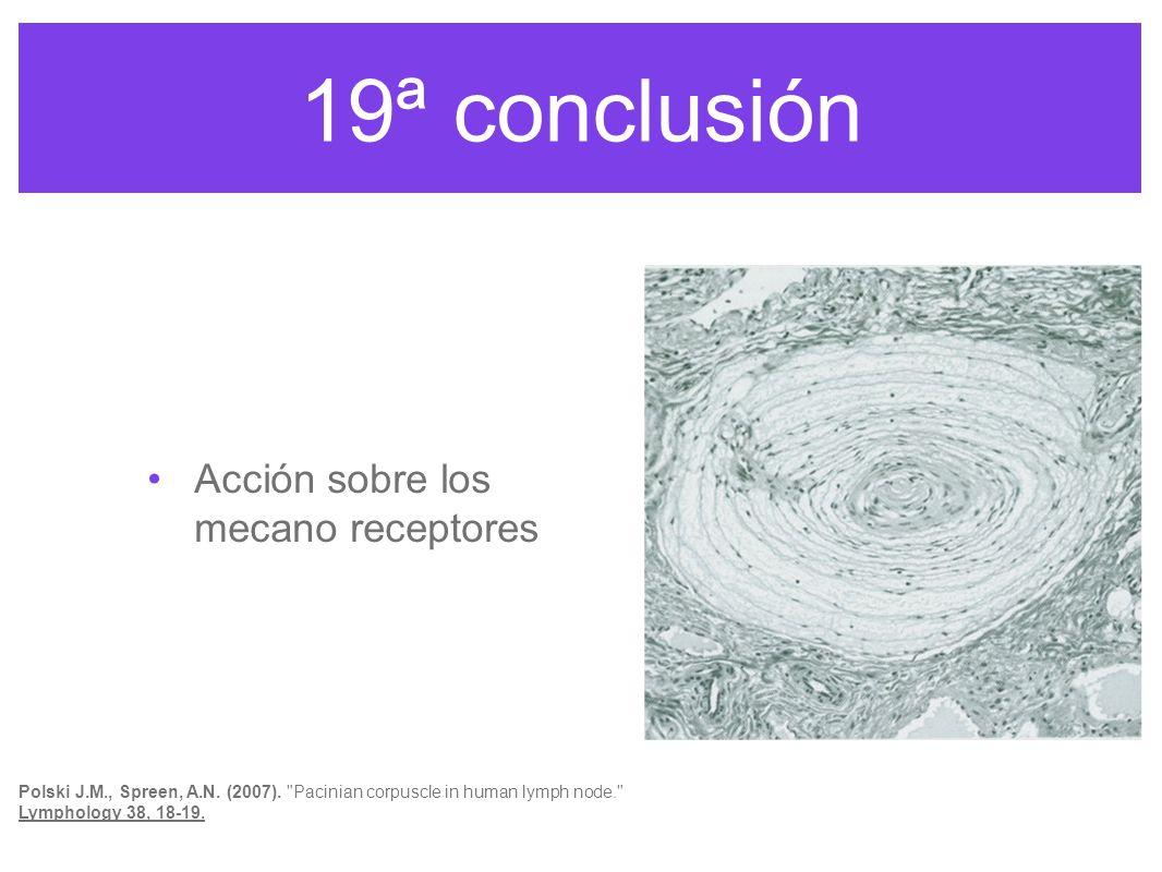 19ª conclusión Acción sobre los mecano receptores