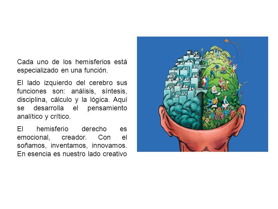 Cada uno de los hemisferios está especializado en una función.