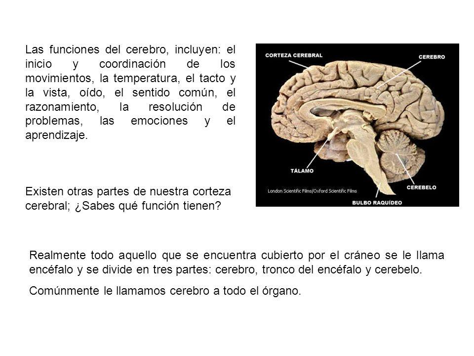 Las funciones del cerebro, incluyen: el inicio y coordinación de los movimientos, la temperatura, el tacto y la vista, oído, el sentido común, el razonamiento, la resolución de problemas, las emociones y el aprendizaje.