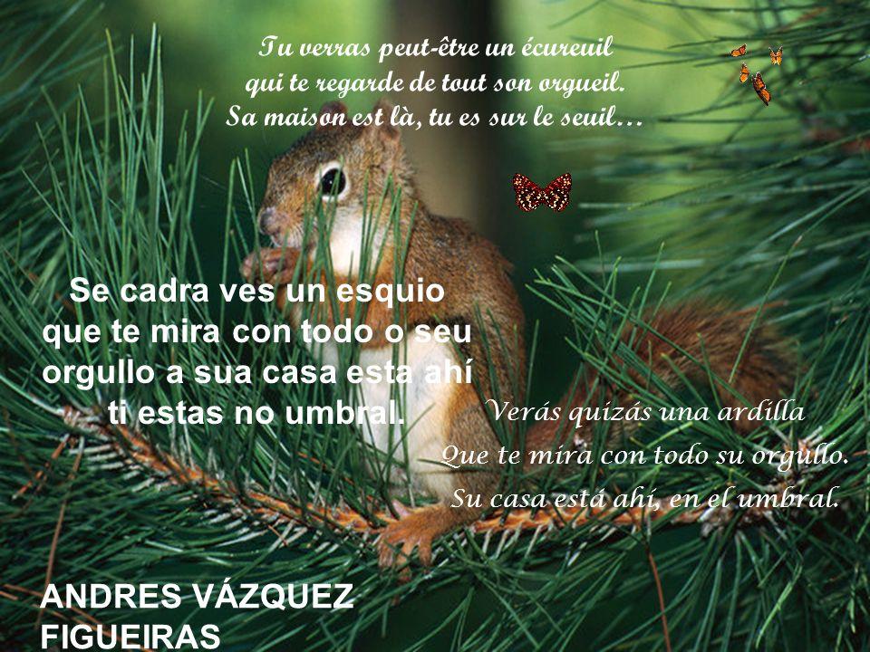ANDRES VÁZQUEZ FIGUEIRAS