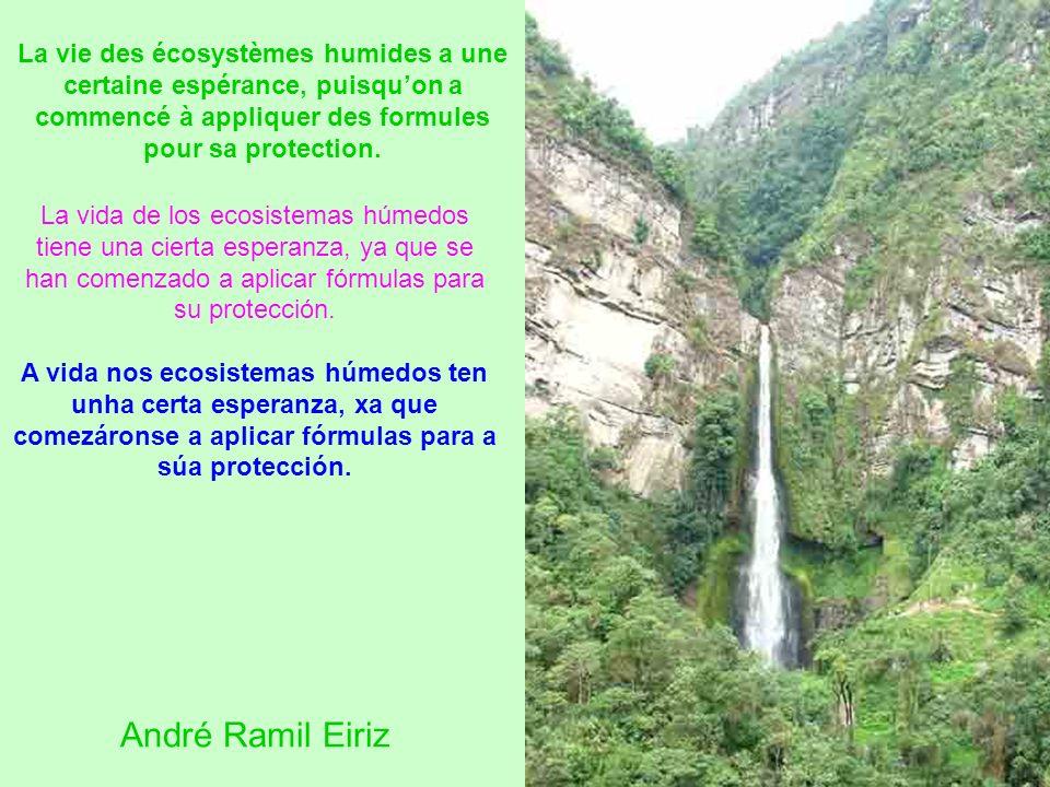 La vida de los ecosistemas húmedos tiene una cierta esperanza, ya que se han comenzado a aplicar fórmulas para su protección.