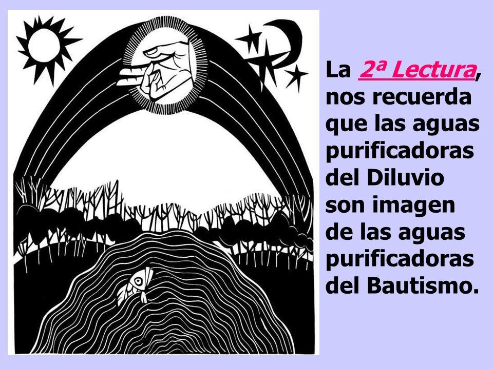 La 2ª Lectura, nos recuerda que las aguas purificadoras del Diluvio