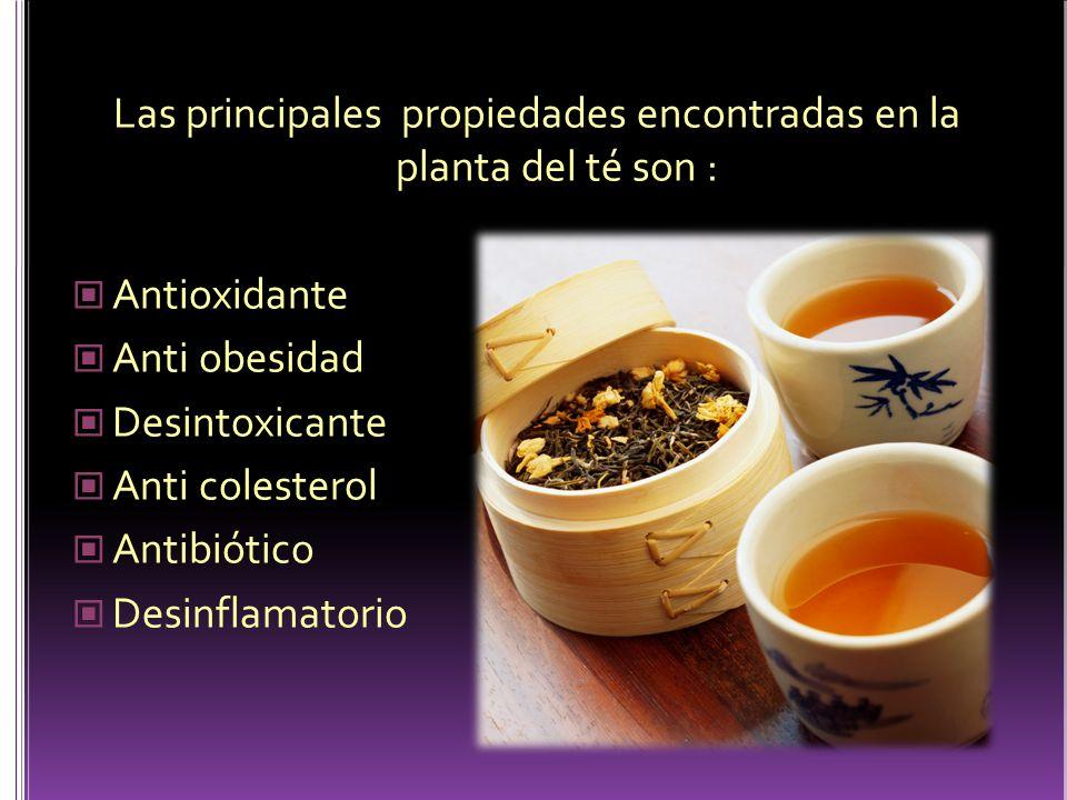 Las principales propiedades encontradas en la planta del té son :