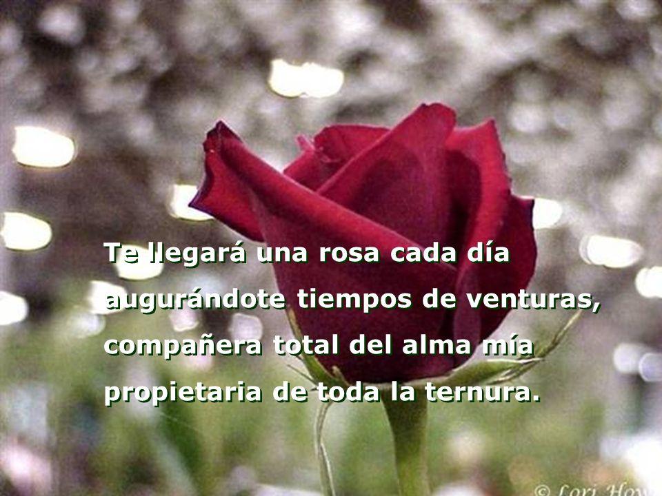 Te llegará una rosa cada día