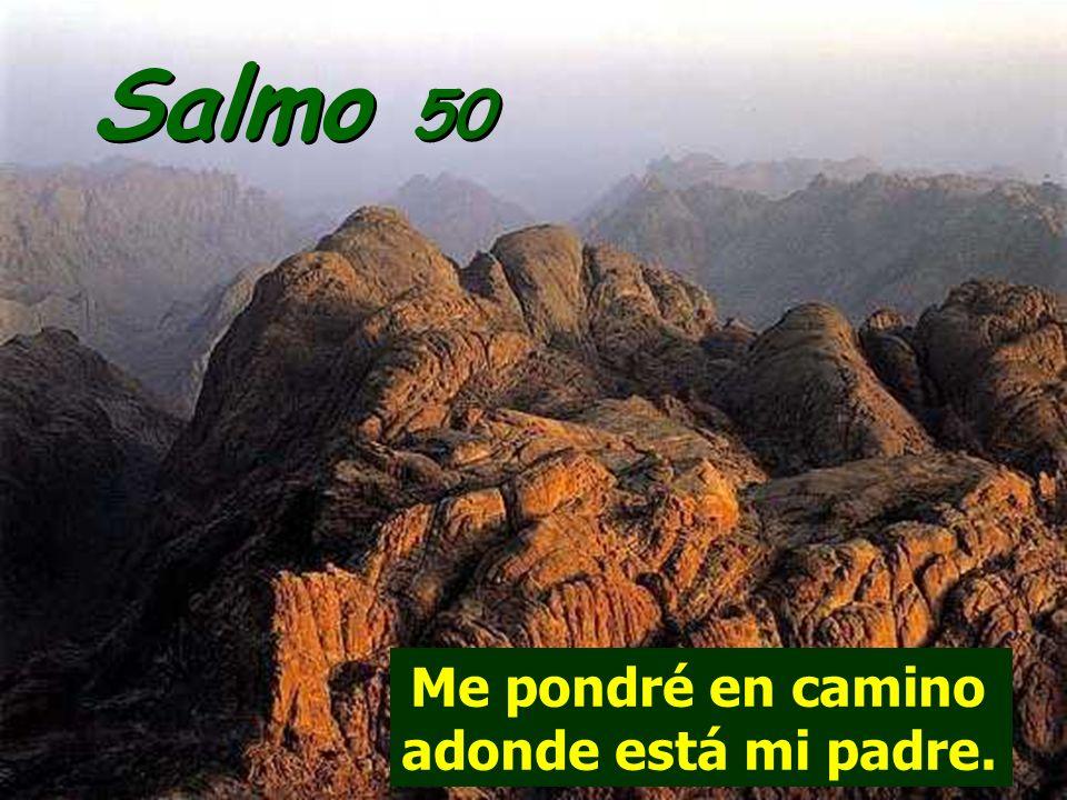 Salmo 50 Me pondré en camino adonde está mi padre.
