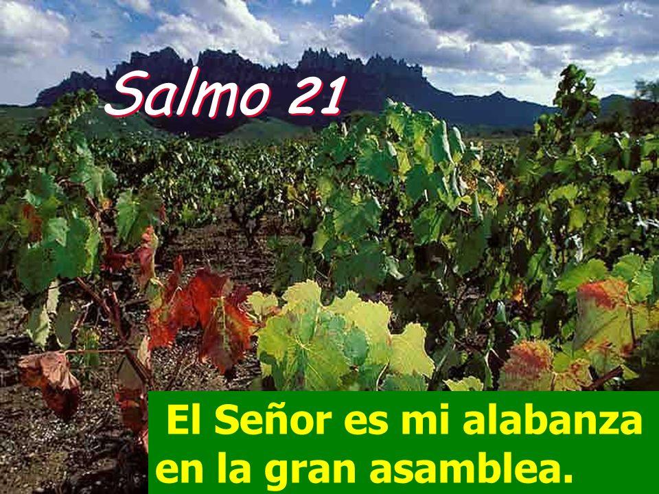 Salmo 21 El Señor es mi alabanza en la gran asamblea.