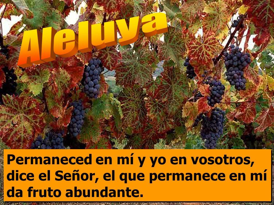 Aleluya Permaneced en mí y yo en vosotros, dice el Señor, el que permanece en mí da fruto abundante.