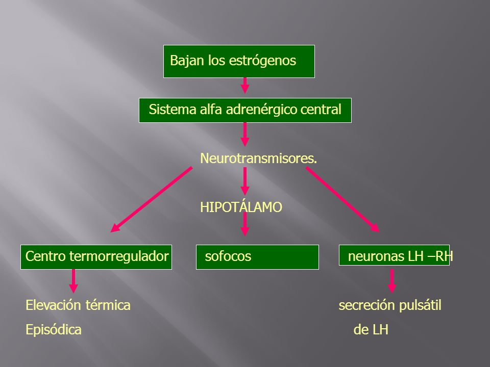 Bajan los estrógenos Sistema alfa adrenérgico central. Neurotransmisores. HIPOTÁLAMO.