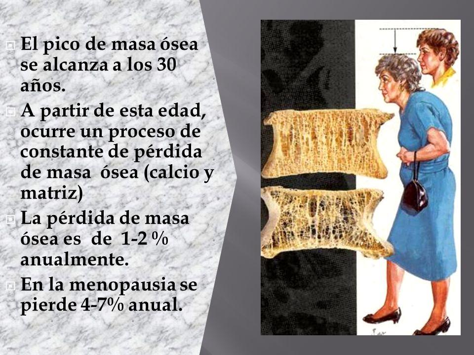 El pico de masa ósea se alcanza a los 30 años.