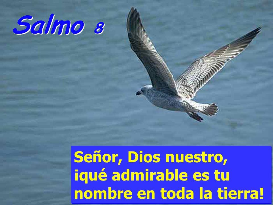 Salmo 8 Señor, Dios nuestro, ¡qué admirable es tu nombre en toda la tierra!