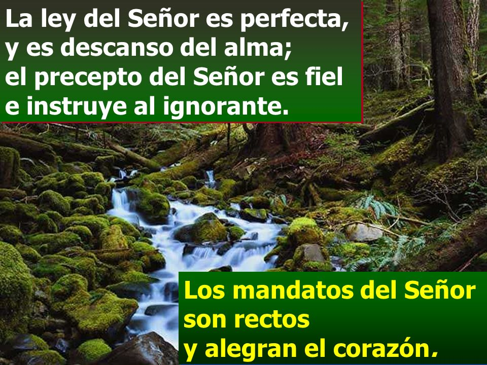 La ley del Señor es perfecta, y es descanso del alma; el precepto del Señor es fiel e instruye al ignorante.