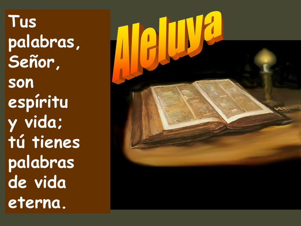 Tus palabras, Señor, son espíritu y vida; tú tienes palabras de vida eterna.
