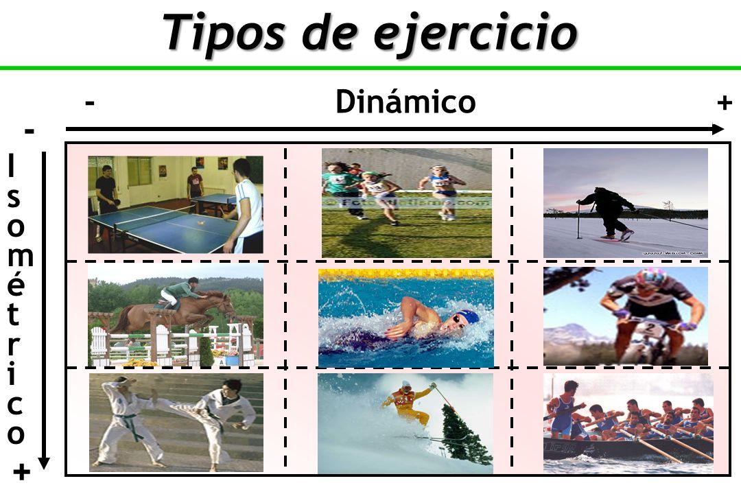 Tipos de ejercicio - Dinámico + - I s o m é t r i c +