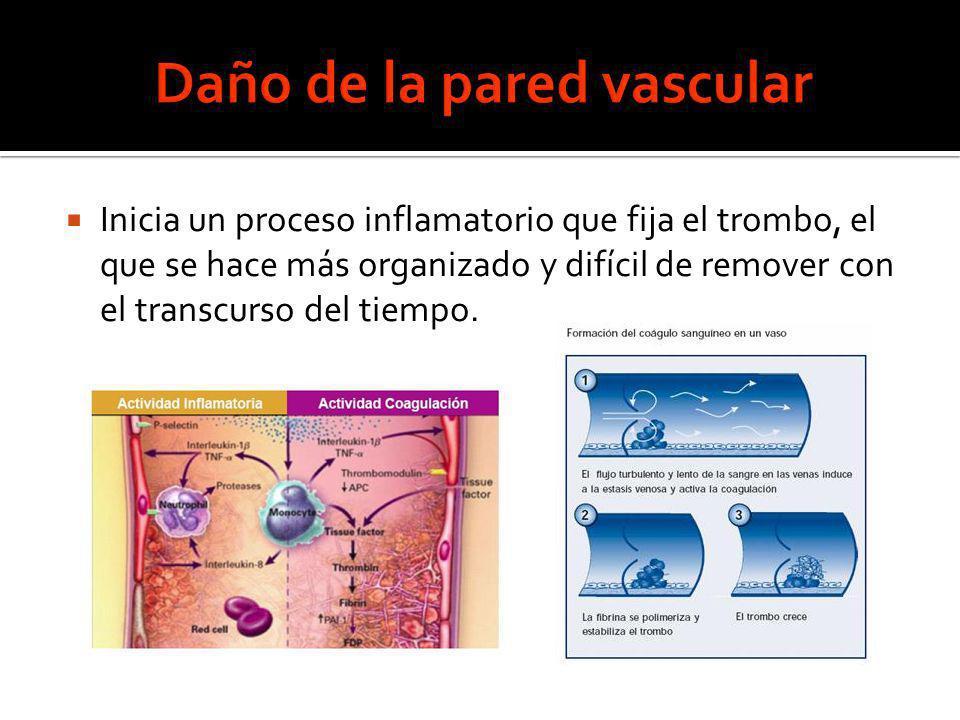 Daño de la pared vascular