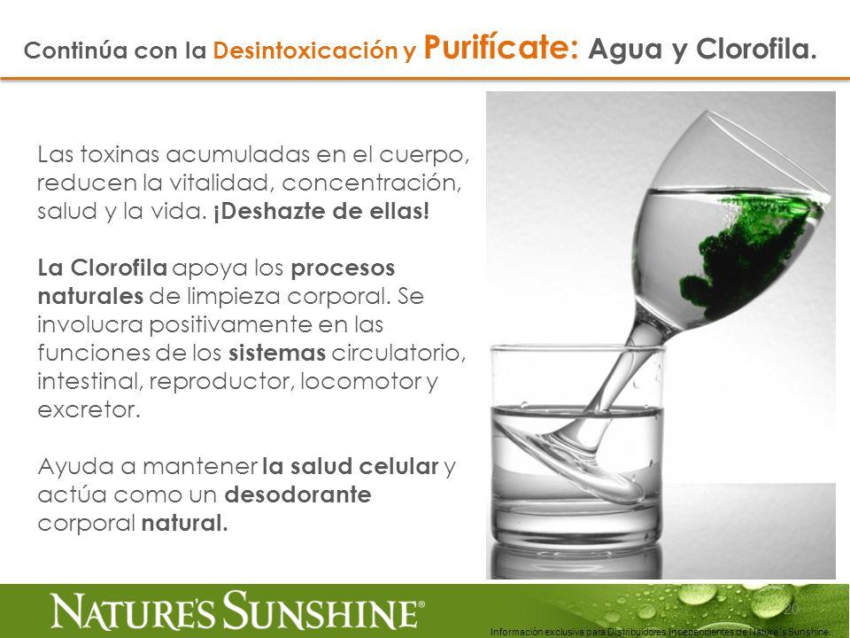 Continúa con la Desintoxicación y Purifícate: Agua y Clorofila.
