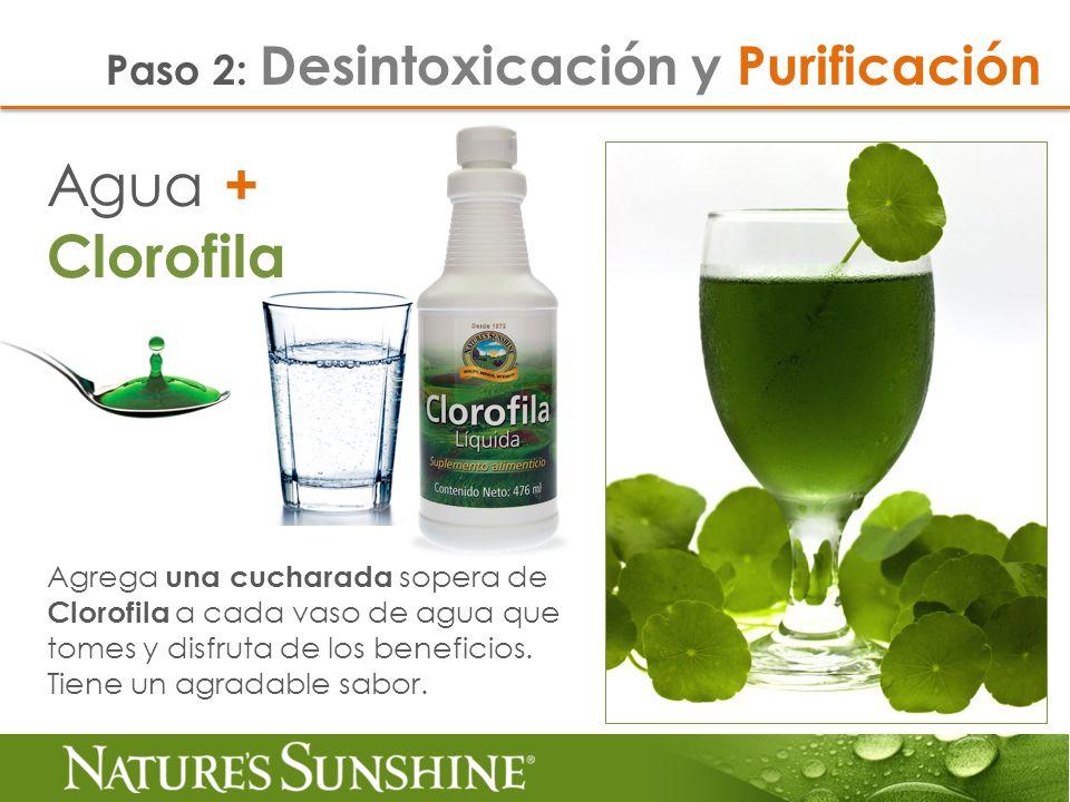 Agua + Clorofila Paso 2: Desintoxicación y Purificación