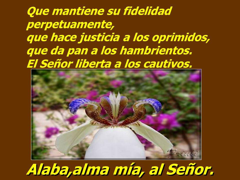 Que mantiene su fidelidad perpetuamente, que hace justicia a los oprimidos, que da pan a los hambrientos. El Señor liberta a los cautivos.