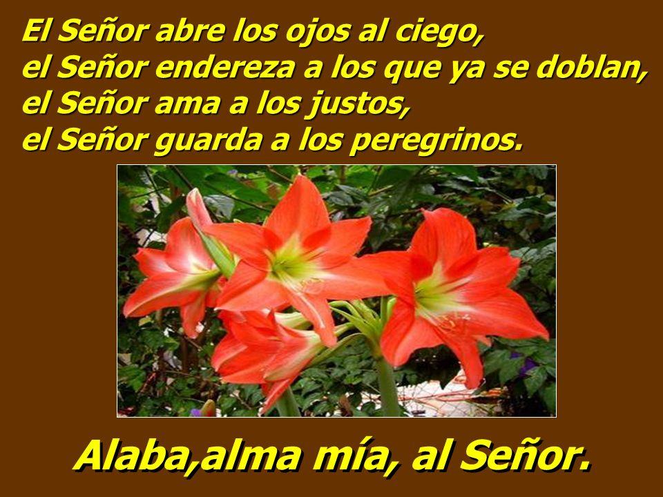 El Señor abre los ojos al ciego, el Señor endereza a los que ya se doblan, el Señor ama a los justos, el Señor guarda a los peregrinos.