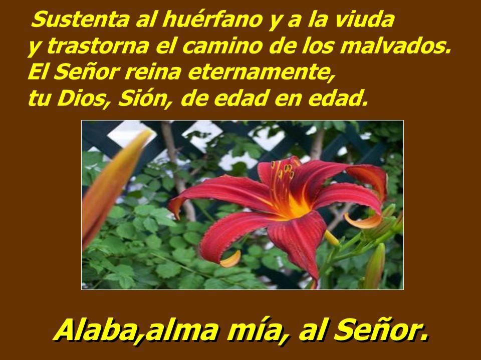 Sustenta al huérfano y a la viuda y trastorna el camino de los malvados. El Señor reina eternamente, tu Dios, Sión, de edad en edad.