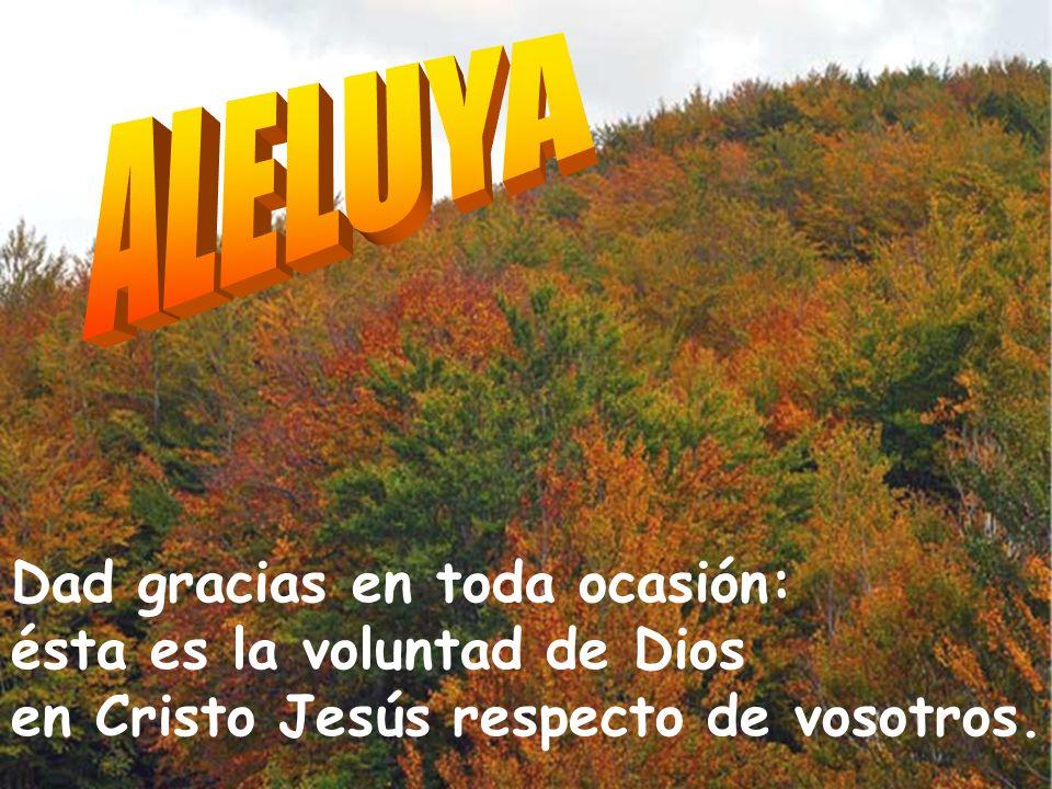 ALELUYA Dad gracias en toda ocasión: ésta es la voluntad de Dios en Cristo Jesús respecto de vosotros.