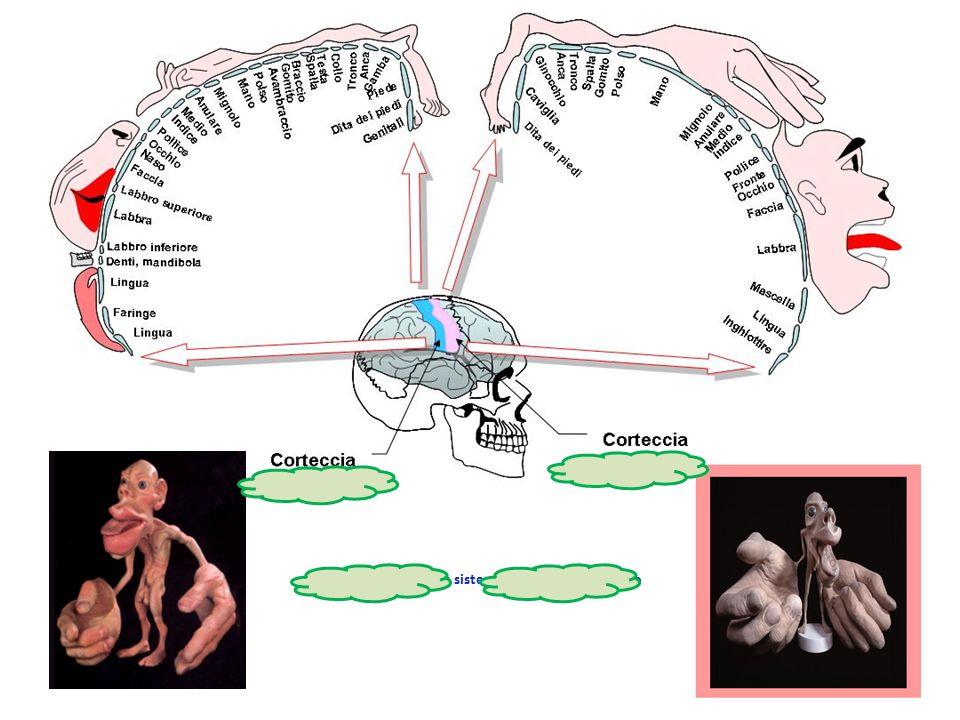Control consciente: sistema nervioso voluntario