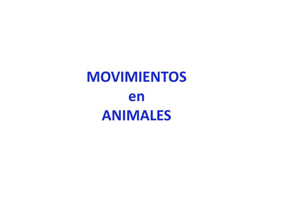 MOVIMIENTOS en ANIMALES