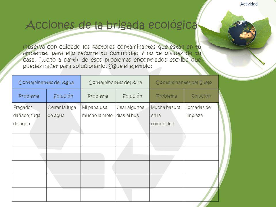 Acciones de la brigada ecológica