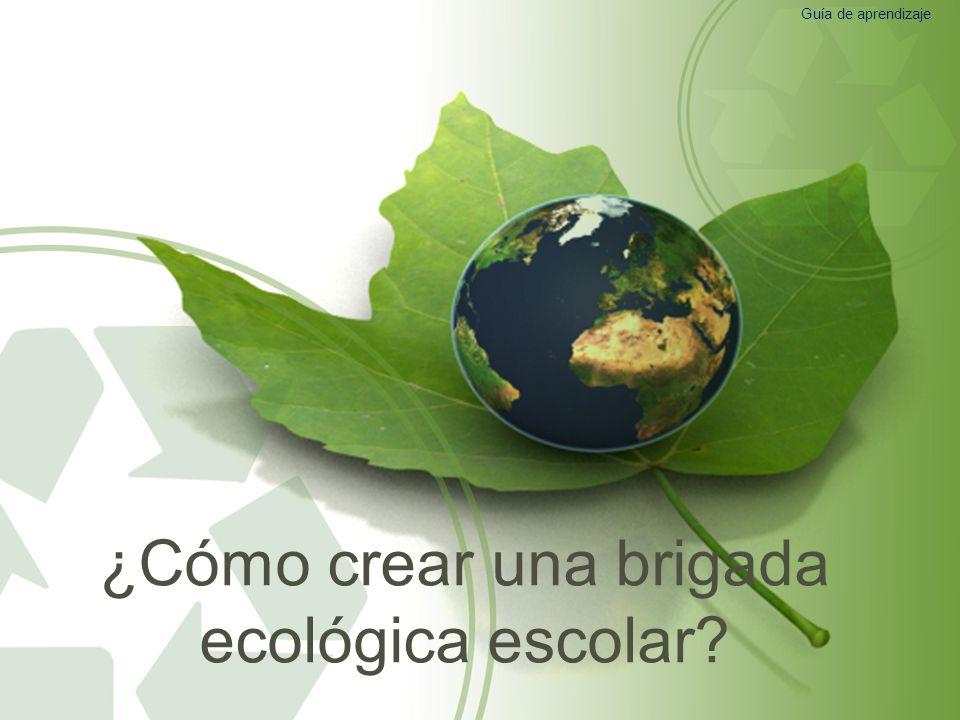 ¿Cómo crear una brigada ecológica escolar