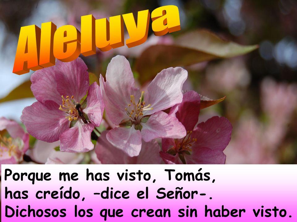 Aleluya Porque me has visto, Tomás, has creído, –dice el Señor-.
