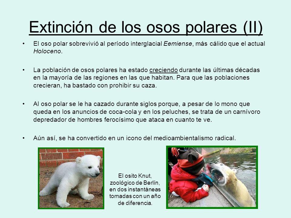 Extinción de los osos polares (II)