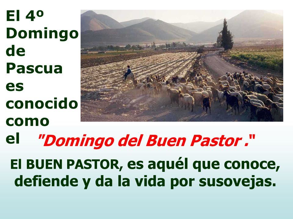 Domingo del Buen Pastor .