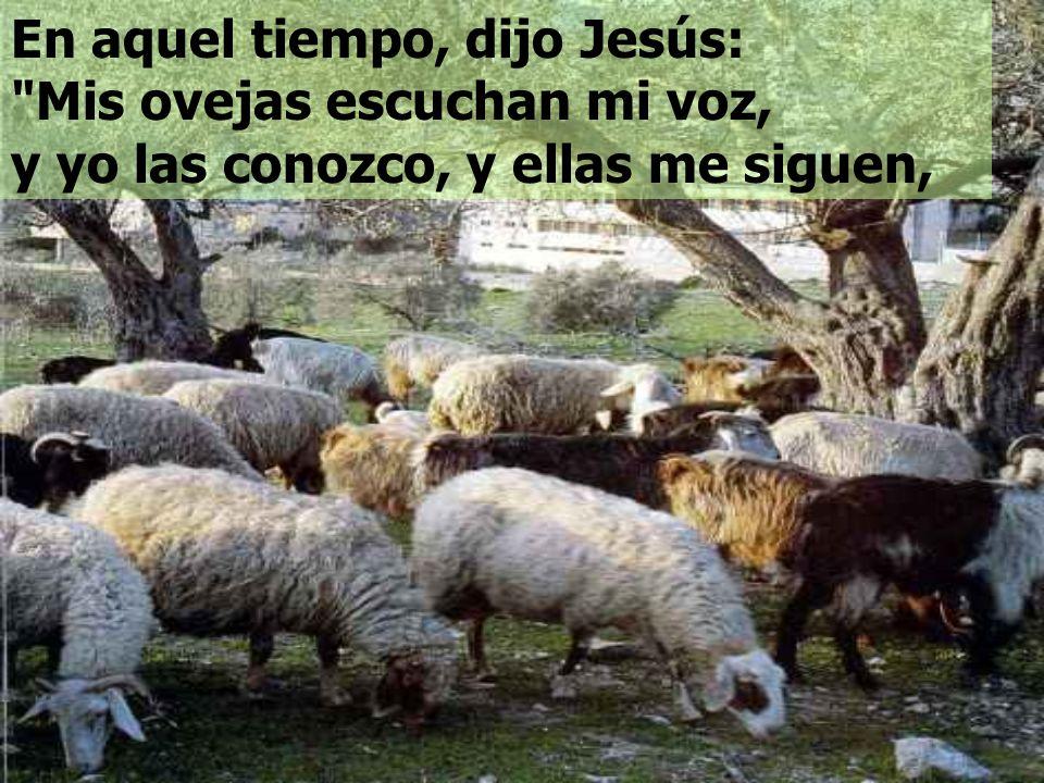 En aquel tiempo, dijo Jesús: Mis ovejas escuchan mi voz, y yo las conozco, y ellas me siguen,