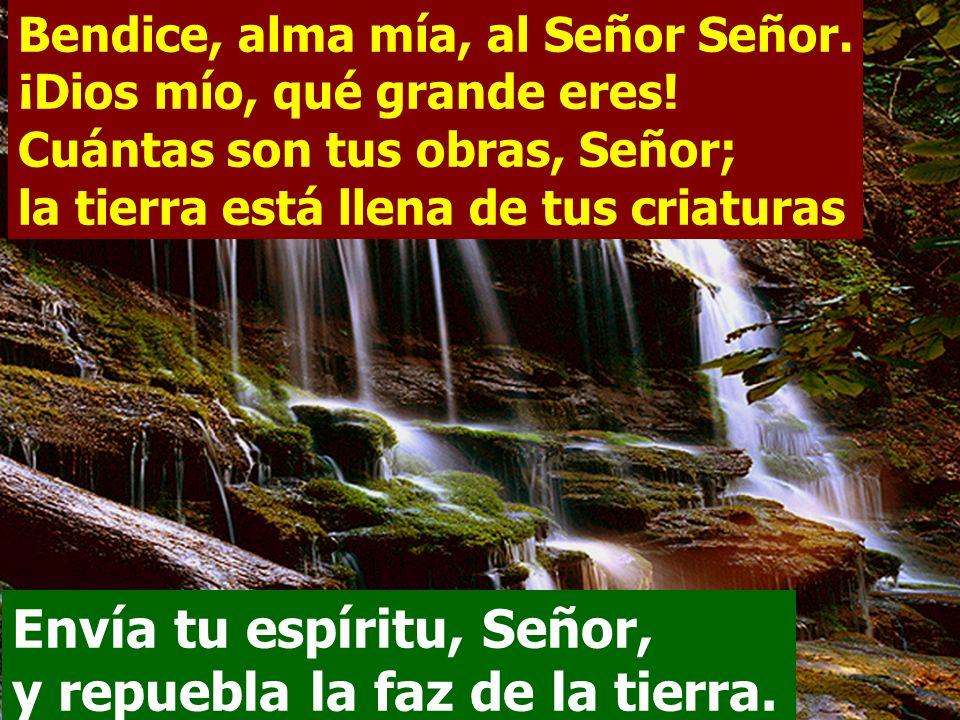 Envía tu espíritu, Señor, y repuebla la faz de la tierra.