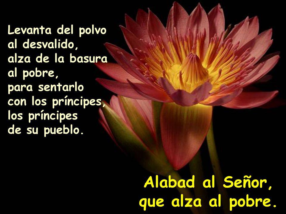 Alabad al Señor, que alza al pobre.