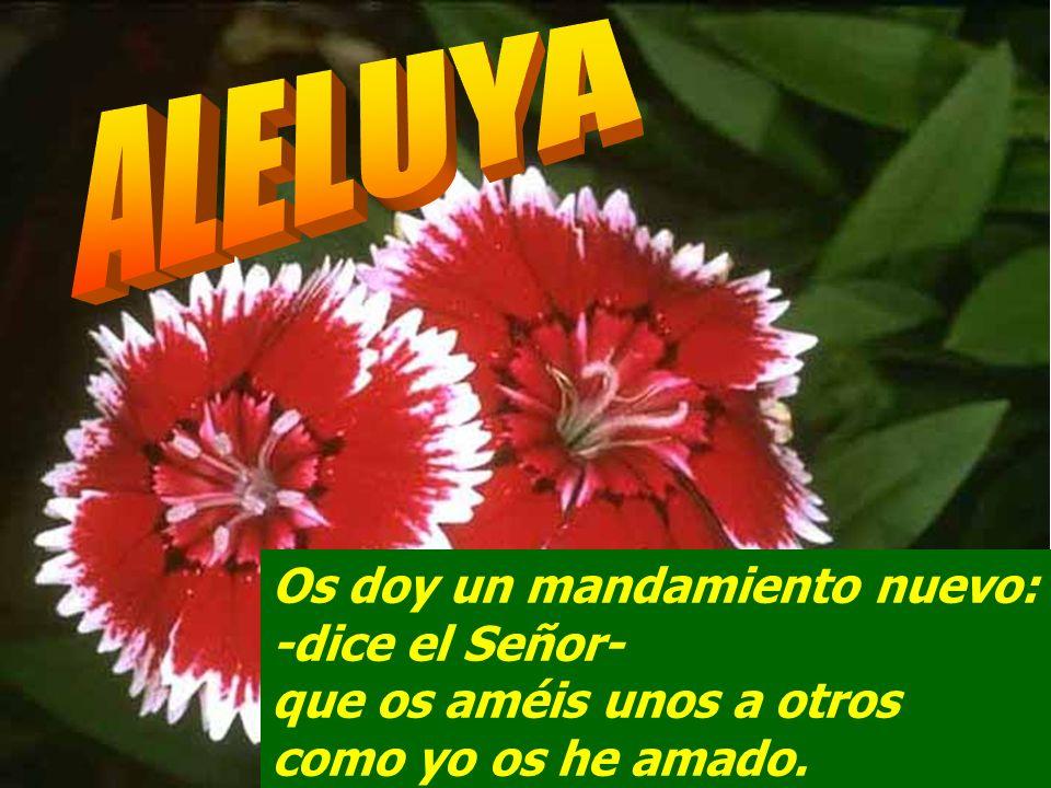 ALELUYAOs doy un mandamiento nuevo: -dice el Señor- que os améis unos a otros como yo os he amado.