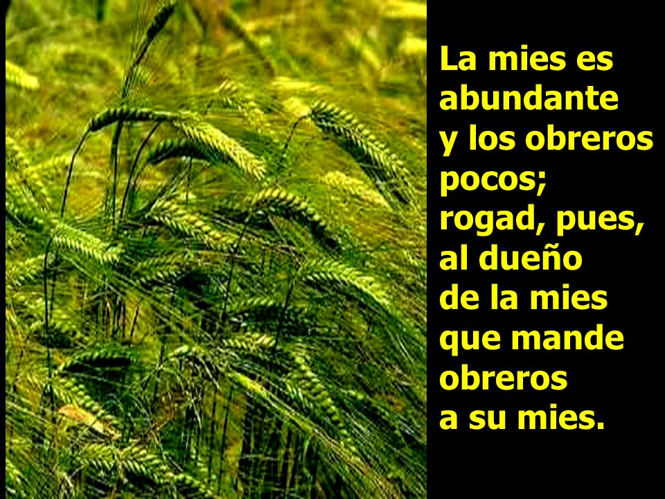 La mies es abundante y los obreros pocos; rogad, pues, al dueño de la mies que mande obreros a su mies.