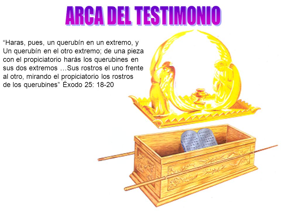 ARCA DEL TESTIMONIO Haras, pues, un querubín en un extremo, y
